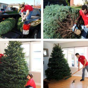 Jõulupuu ülespanek