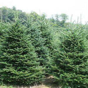Jõulupuu nulg pikkus J 4